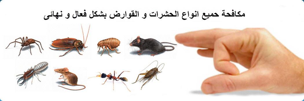 شركة مكافحة حشرات بجازان _ شركة نور المملكة