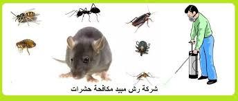 شركة مكافحة حشرات بجازان _ نور المملكة
