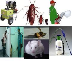 شركة رش مبيدات بابها