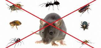 المشاكل التى تسببها الحشرات فى المنزل