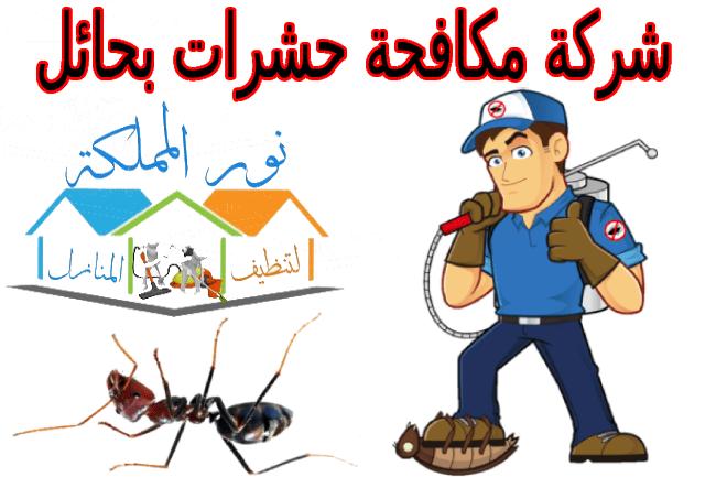 شركة مكافحة حشرات بحائل 0556301148